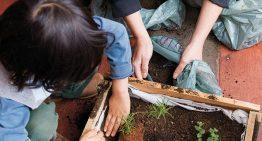Escolas das redes pública e privada de SP contam como produzem adubo natural