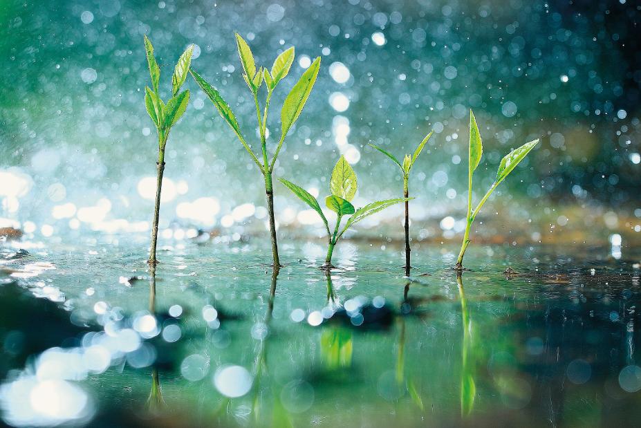 Foto: Kichigin/Shutterstock