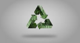 Curso online propõe reflexão sobre sustentabilidade para professores do ensino fundamental